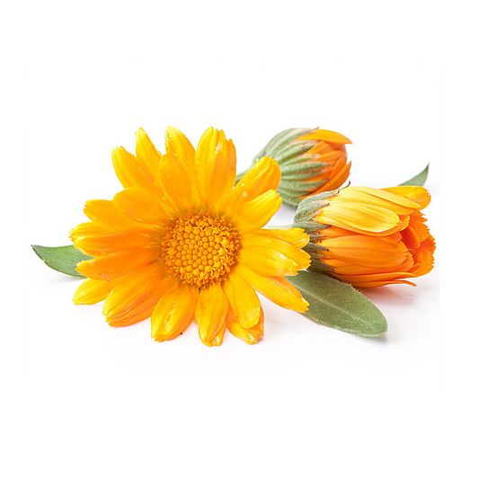 Calendula Skin Care Benefits