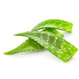 Aloe Vera Skin Care Benefits