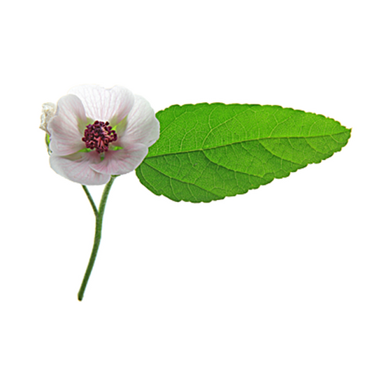 Marshmallow Root Extract Skin Care Benefits