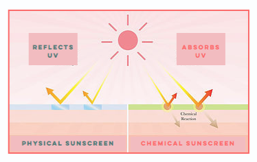 How do Physical (Mineral) and Chemical (Synthetic) Sunscreens work