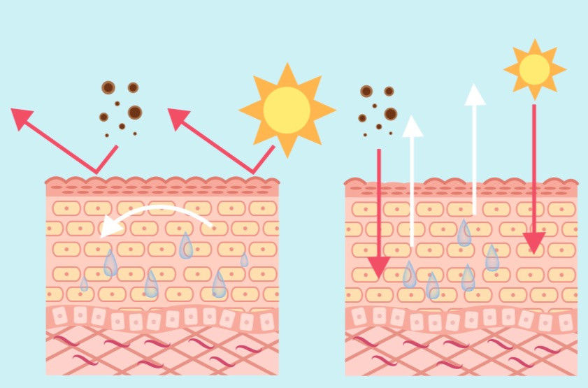 Diagram showing a compromised skin barrier which may lead to dehydrated skin