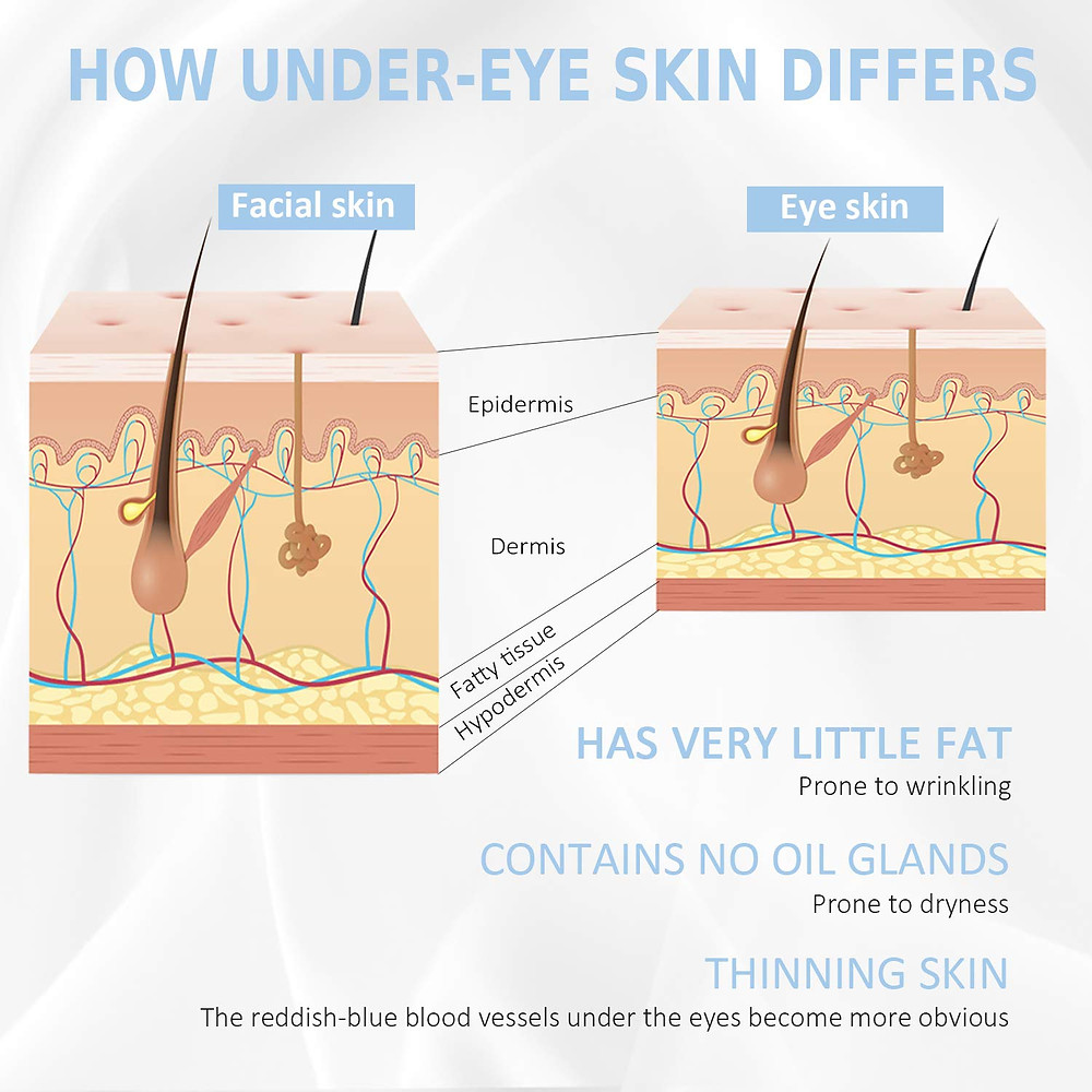 Diagram showing the difference between the skin around the eyes compared to the rest of the face