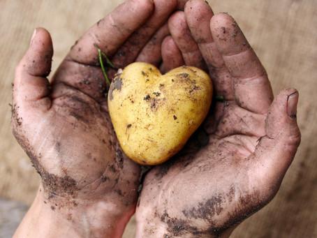 Sanctuarisation des terres exploitées en agriculture biologique