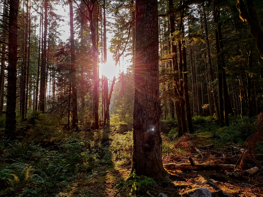Sun in Forest.png