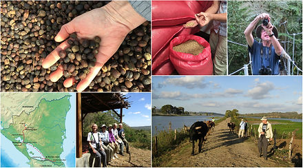Collage of images taken by MAS members during their trip to Nicaraqua shade grown coffee farms.