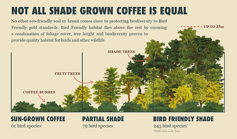 Infographic explaining why alll shade grown coffee is not equal
