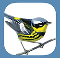 Sibley mobile app for identifying birds