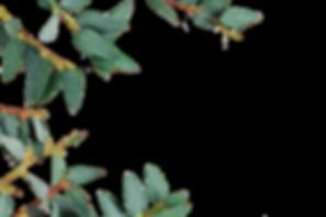 leaf-overlay-final.png
