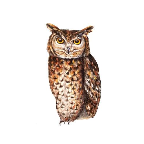 Owl Medicine Print
