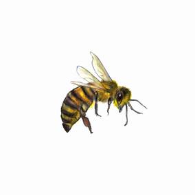Bee Medicine