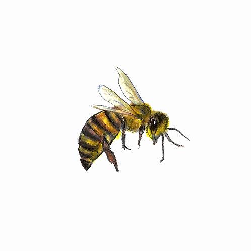 Bee Medicine Print