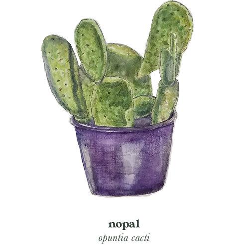Nopal Cactus Medicine Print