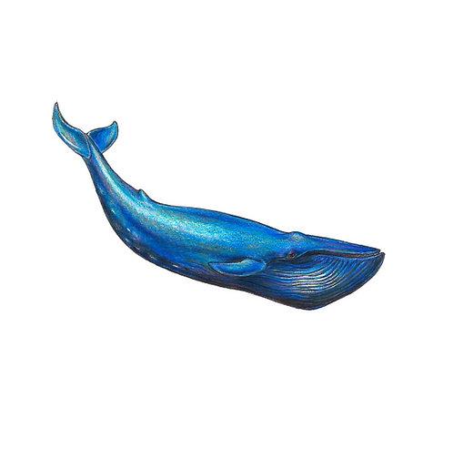 Blue Whale Print