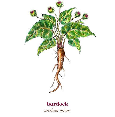 Burdock Medicine Print