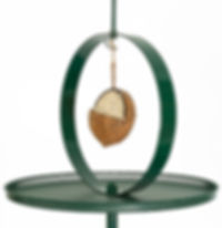 Coconut feeder hanging in a hoop