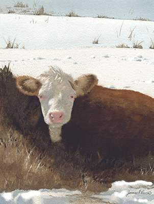 Cow in the Snow  (original)