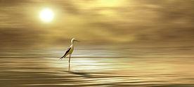 bird-4399812_1920.jpg