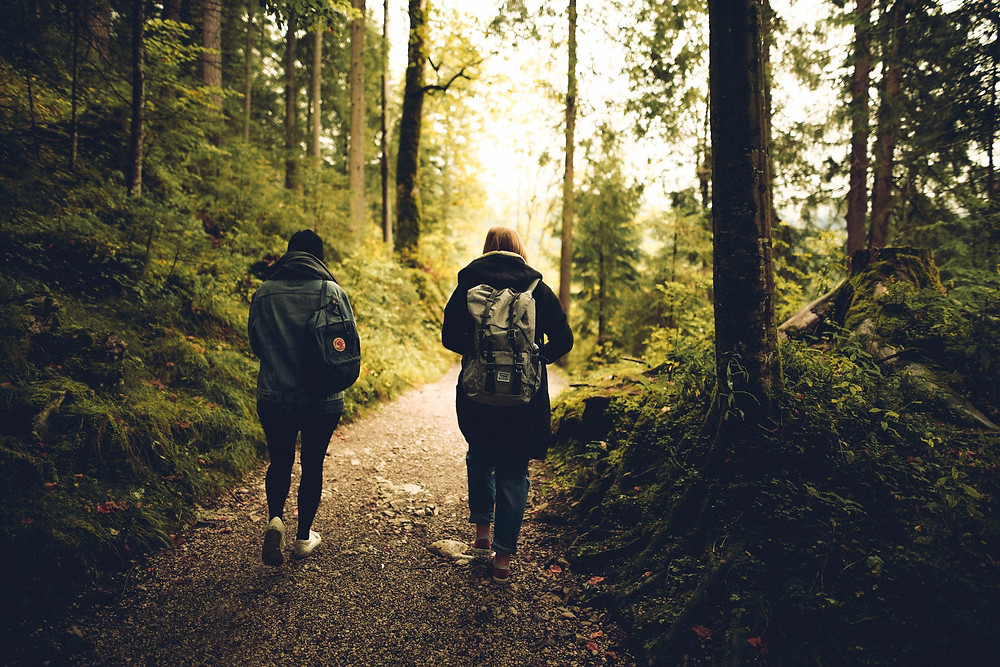 Two people walk along a forest path away from the camera
