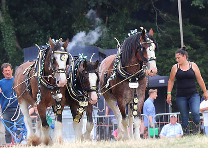 Heavy Horses going around the Main Arena