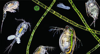 Plankton.jpg