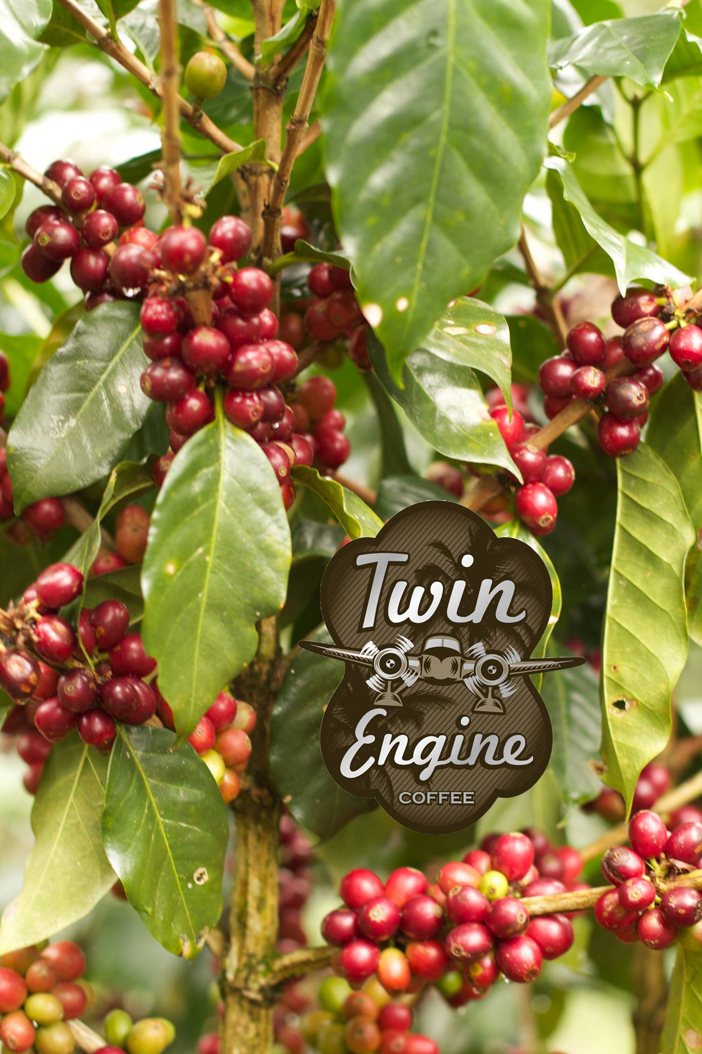 Twin Engine Coffee Plant