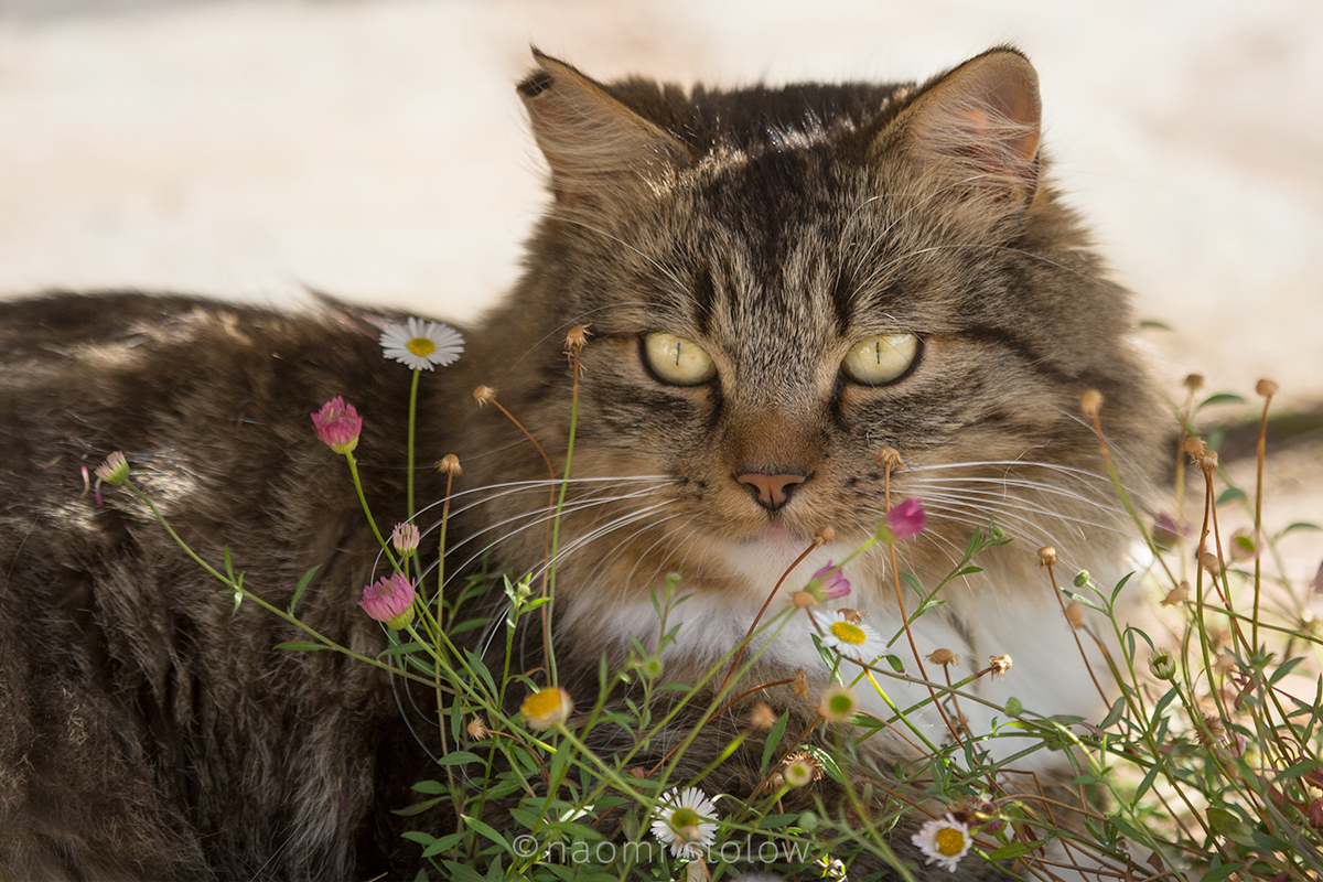 Simba in his flowers