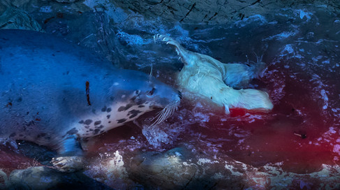 Seal birth
