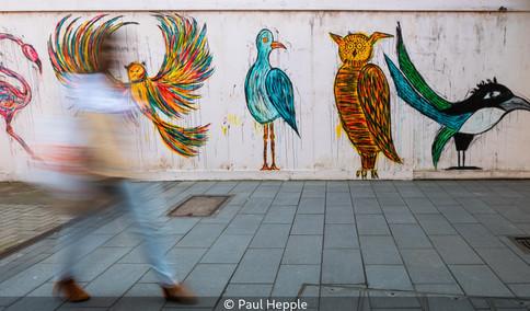 Fabulous birds