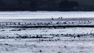 Birds on the Teign