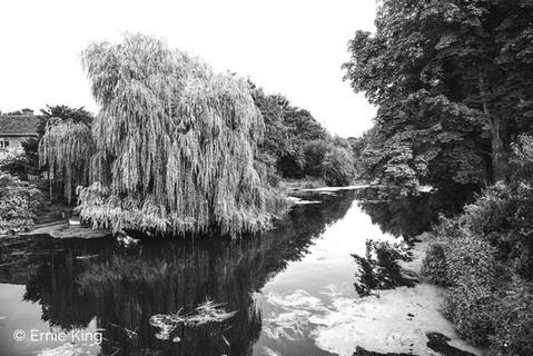 Willow on Stour