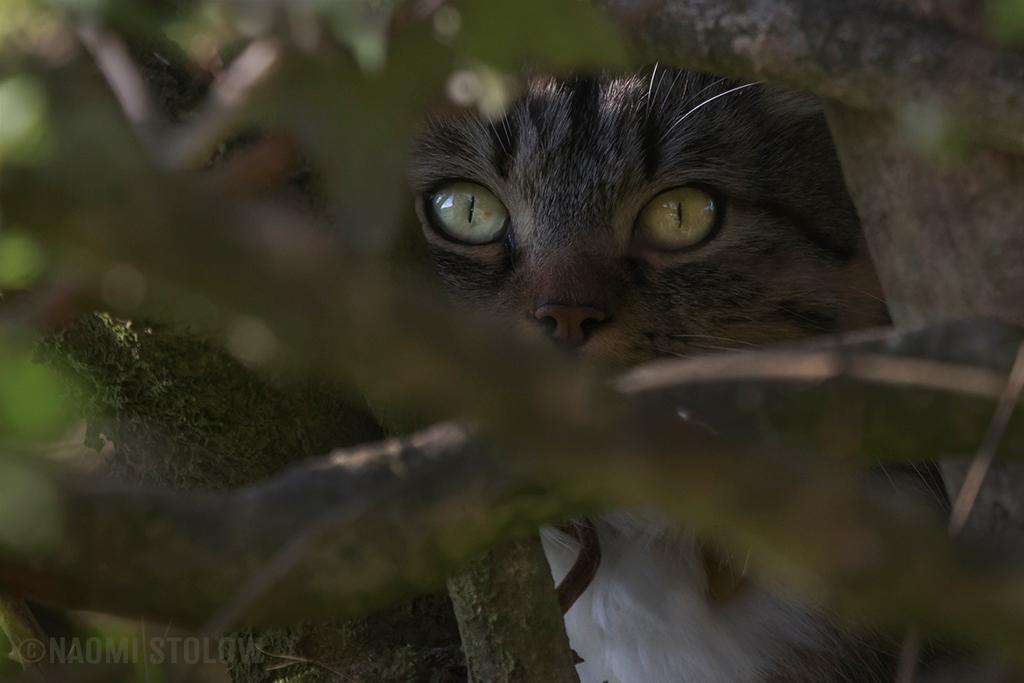 Simba's eyes