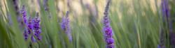 wildflowers-banner