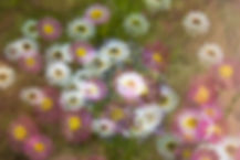 A47I0558_web.jpg