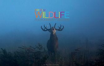 BWPA British Wildlife Photography Awards