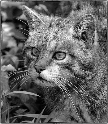We call him Mr Whiskers © Barry Holmes
