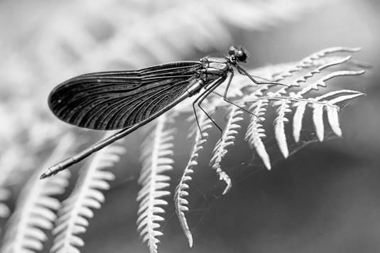 A47I9489_dragonfly_web.jpg
