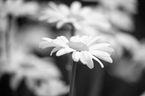 A47I8274_flower-web.jpg