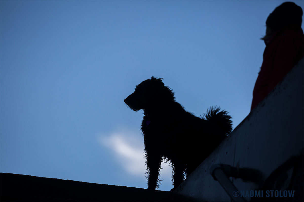 Our lovey dog on the lookout
