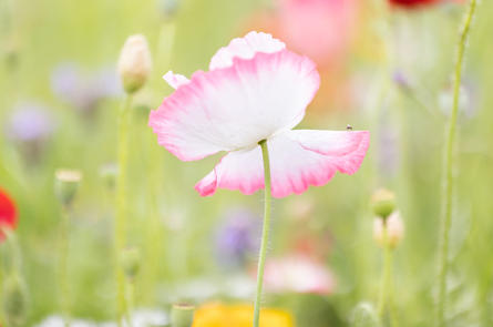CY6A0289_wildflowers_web.jpg