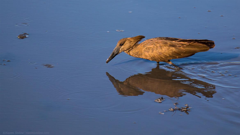 bird-water