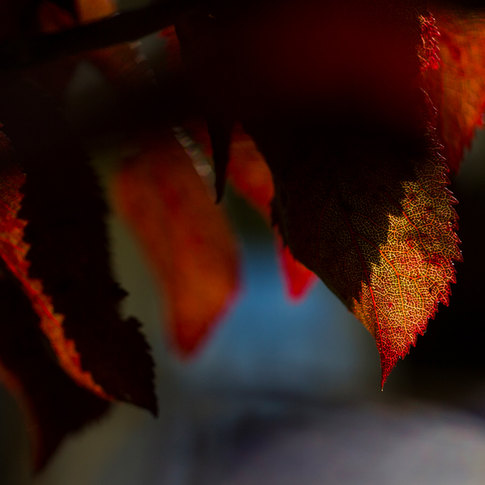 leaves_closeup.jpg
