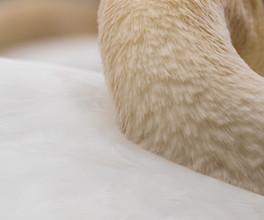 Swan's neck