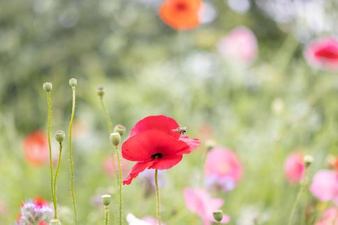 CY6A0369_wildflowers_web.jpg