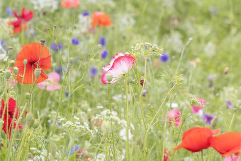 CY6A0311_wildflowers_web.jpg