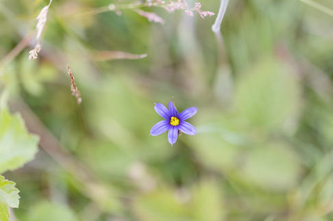 CY6A0466_flower_web.jpg