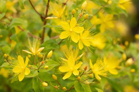 A47I8364_yellow_flowers_web.jpg