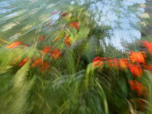 Cliff garden