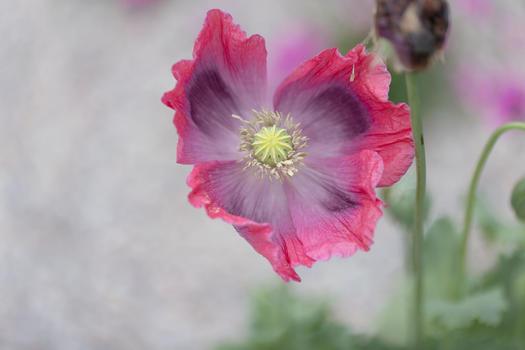 CY6A0483_wildflowers_web.jpg