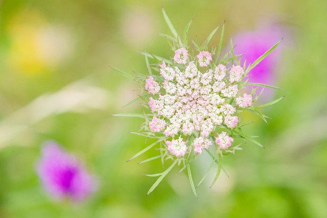 A47I8574_flower_web.jpg