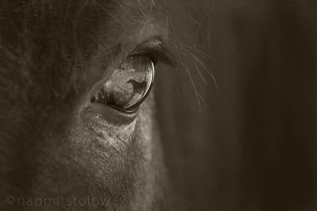 EW9A9757_horse_beany_eye_fb